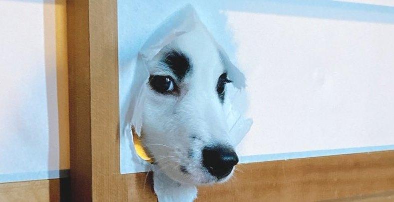 障子が…っ!ご飯の気配を察した愛犬が覗く姿にツイッター民爆笑