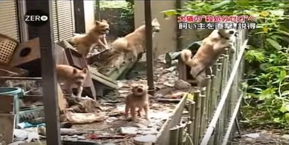 犬猫殺処分ゼロに!熊本市愛護センターの地道な取り組み