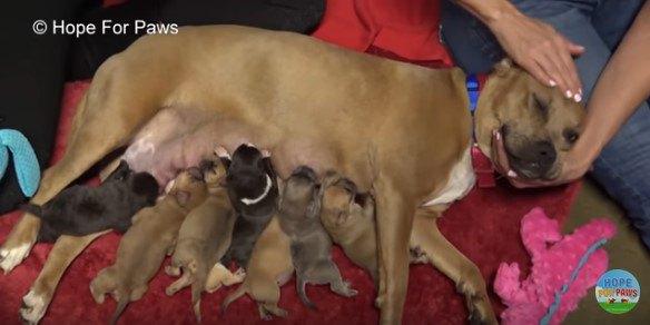 大雨&停電!大荒れの中、穏やかな母犬と生まれたばかりの子犬8匹を保護