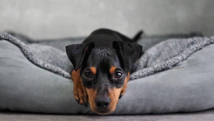犬の寝床にしてはいけないNGな場所4選!落ち着いて眠れないかもしれません
