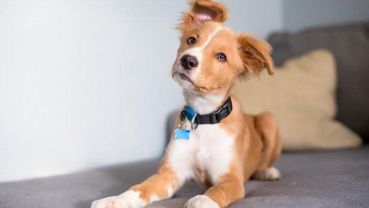 犬が首輪を嫌がるときにしてはいけないNG行為2選