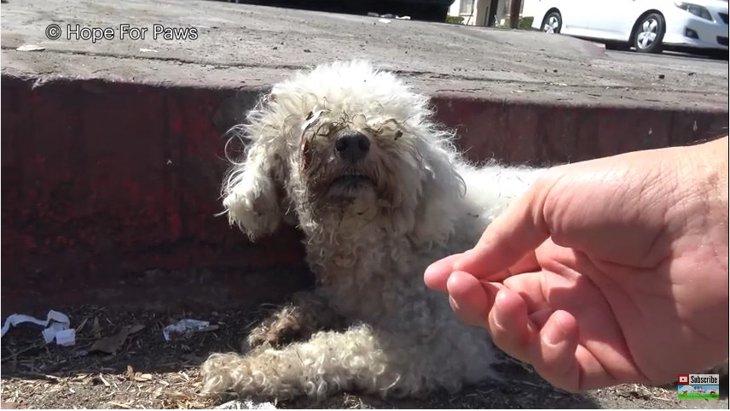 24時間放置されていた!負傷して道路脇から動けなくなった犬