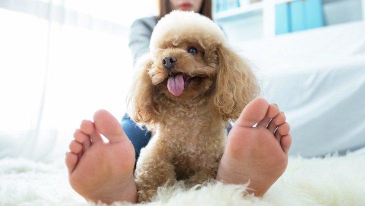 犬の『寝場所』で飼い主への気持ちがわかる!4つのパターンから紐解く愛犬の心理