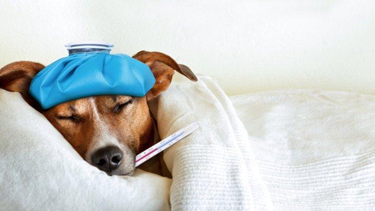 犬だけの感染じゃない!感染症犬ジステンパーの原因と症状!