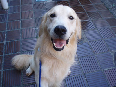 海外の老犬ホーム ~動物愛護国イギリスわんこ事情~