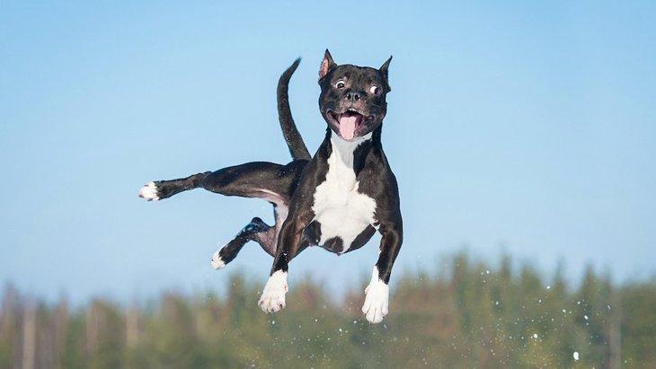 犬にジャンプをさせるのが危険な理由3つ