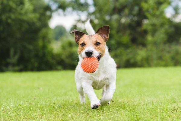 犬用のおもちゃのボール!人気おすすめ6選