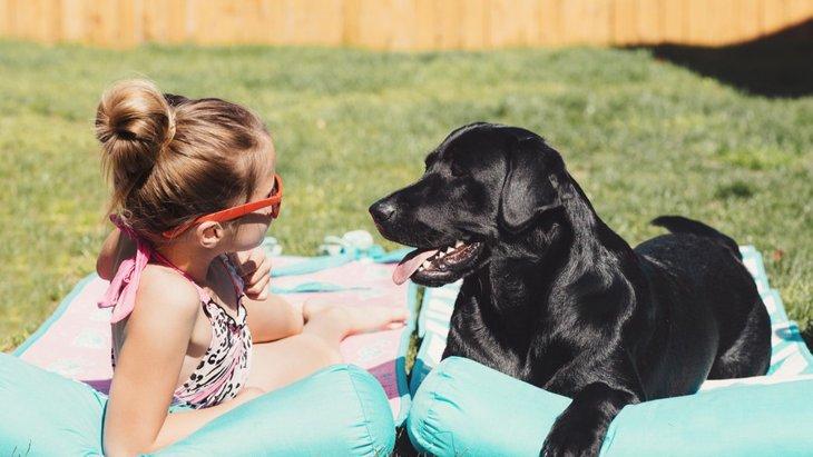 犬に日差しを浴びさせるメリットと注意したいこと