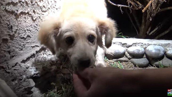 プレゼントされた犬は「もういらない」から捨てる?