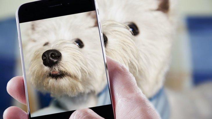 犬がスマホのカメラから目をそむける理由4つ