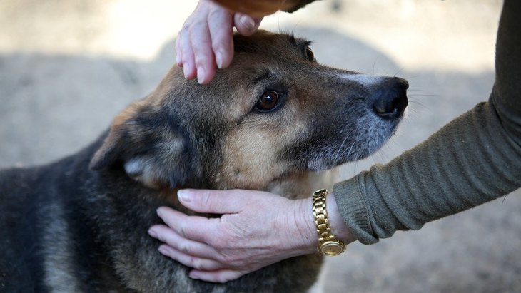 犬の飼育放棄 実際に目撃したケースと保護するための方法