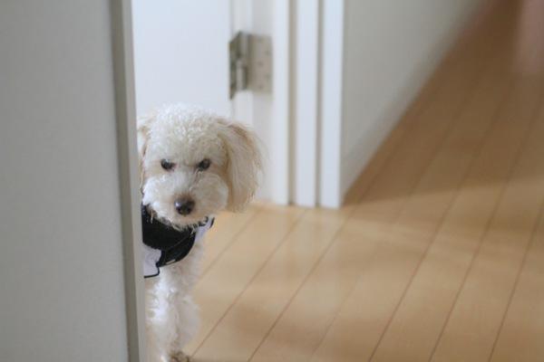 愛犬との遊び方♪室内でのストレス解消法