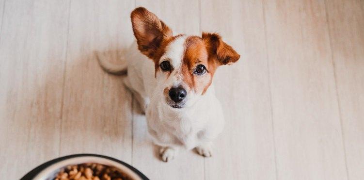 犬が『ご飯の要求』をしている時にするべきではないNG行為3選