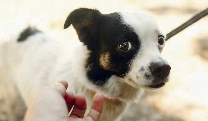 犬に体罰を絶対にしてはいけない理由4選