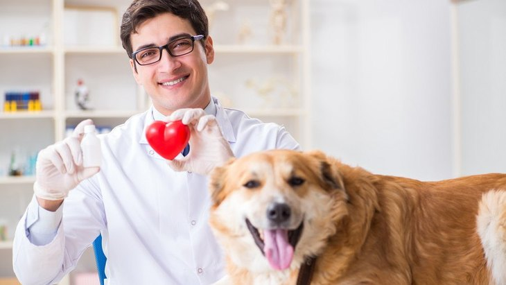 犬のグレインフリーフードと拡張型心筋症の関連について専門家チームが否定的見解