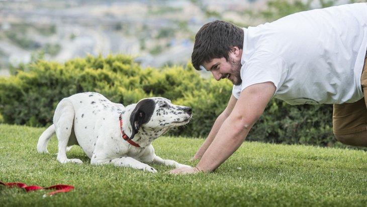 犬が手足を伸ばす3つの心理と気を付けたいこと