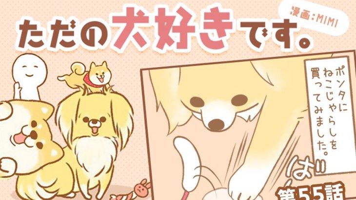 ただの犬好きです。【第55話】「ねこじゃらし」