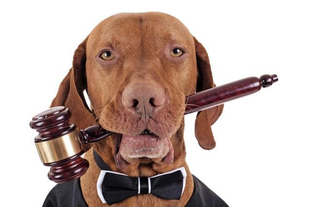 犬や猫への虐待者に厳しくユニークな判決を下すアメリカの裁判官