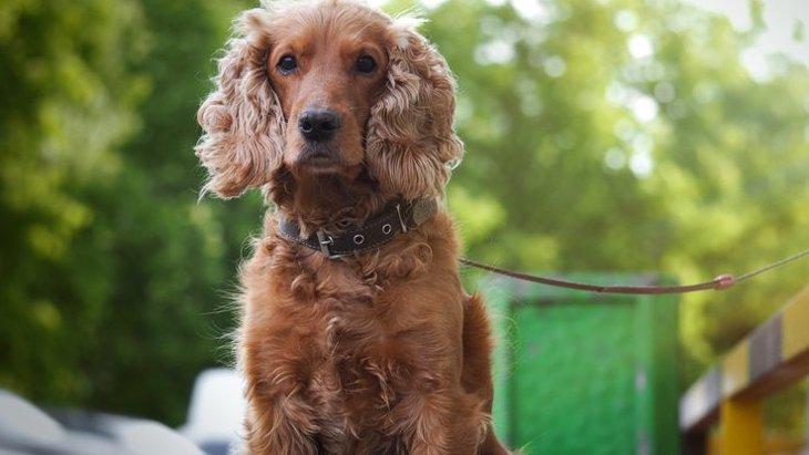 犬を飼ってる人が必ず知っておくべき『犬に関する事件』2選