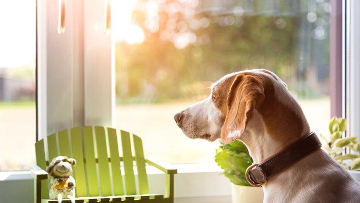 甘え上手な犬と甘え下手な犬・・・この違いって何?
