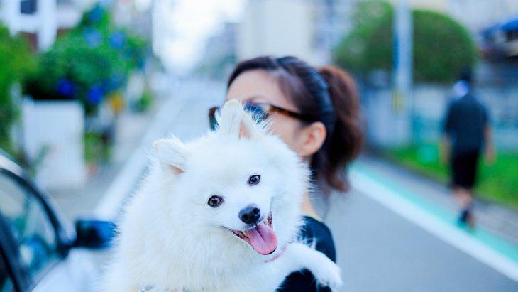 「他の犬」を可愛がると愛犬は嫉妬するのか?