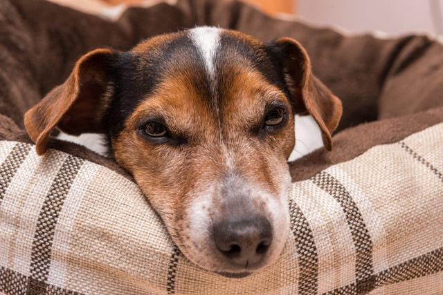 犬のタマネギ中毒に要注意!危険な症状や治療法まで