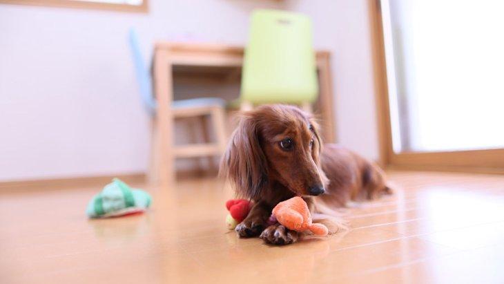 愛犬がお留守番中寂しくならないようにする4つの方法