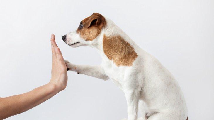 犬の芸の種類について ~役立つおすすめコマンド~