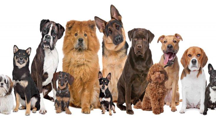 犬の遊び行動が犬種によって違うのは選択繁殖の影響?【研究結果】