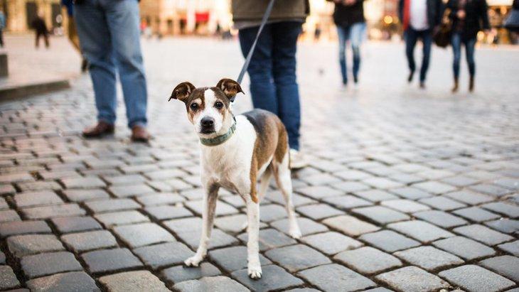 犬のお散歩中のトラブルを回避する方法5つ
