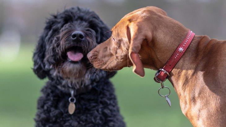 他人の犬に絶対してはいけないNG行為3つ