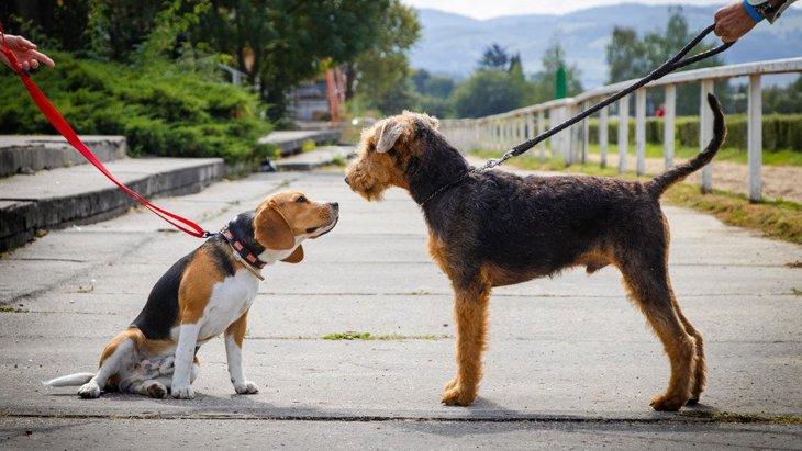 犬の散歩で他の犬とすれ違った時にしてはいけないNG行為3選