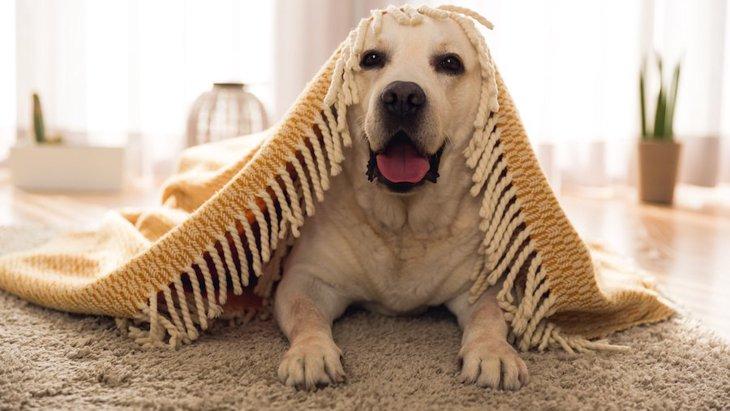 冬の犬の留守番対策!寒い季節はどうするのがベスト?