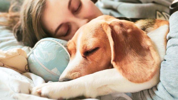 犬が『寝心地がいいと思っている』飼い主の体の部位3選