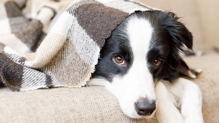 なぜ犬は『大きな音』を嫌うの?4つの理由と暮らしのコツを解説