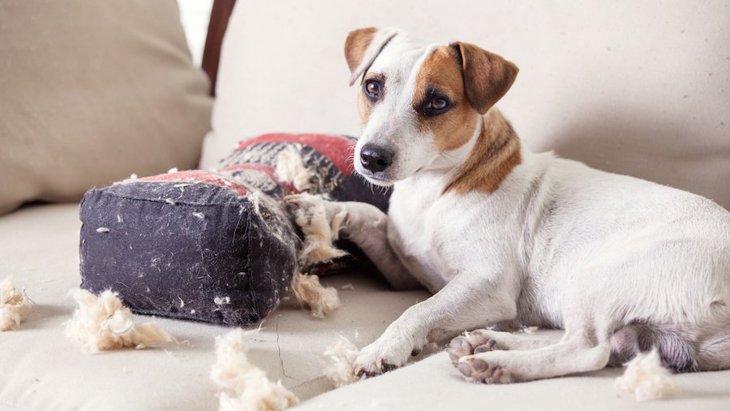 犬を室内で飼うと部屋がボロボロになる理由と対策