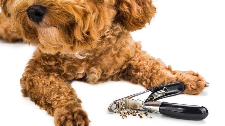 非常に危険!犬の爪を放置し続けるとどうなるの?