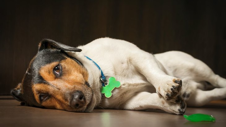 犬はお留守番している時、どんな気持ちなの?考えられる5つの心理