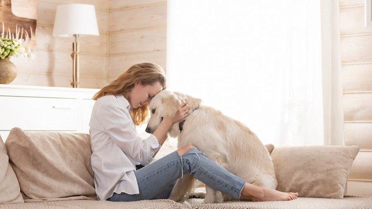 長生きするのはどんな犬?アメリカのリサーチ結果より
