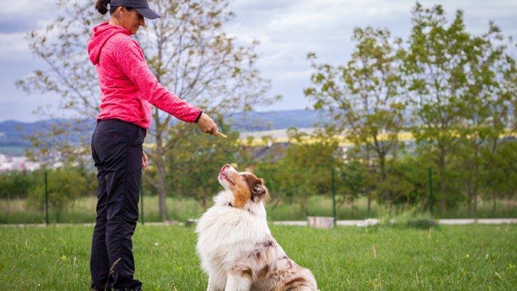 犬の吠え癖を直す4つの方法!コツやNG行為を解説