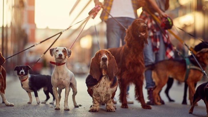 犬の『マイペース度診断』チェック項目6つ!あなたの愛犬の性格はどう?