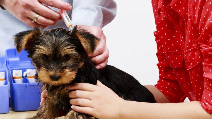 子犬のワクチン接種について!種類や値段、気をつける病気