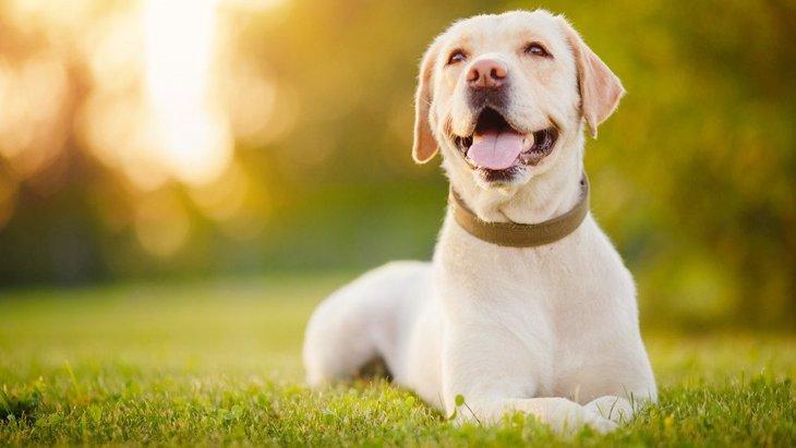 犬にとっての『辛い姿勢』4選!こんな状態だったら注意が必要かも…?