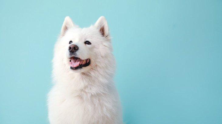 犬が夜泣きをする原因とは?年齢別に紹介|夜泣きをなくす9つの方法