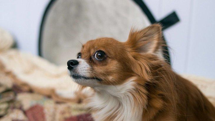 『ビビりな犬』の共通点3選