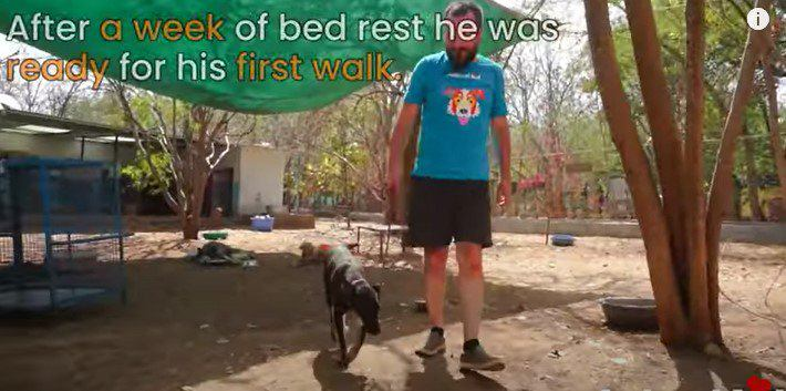 足に怪我をした犬。小さな少年の行動で走り回れる程に回復!