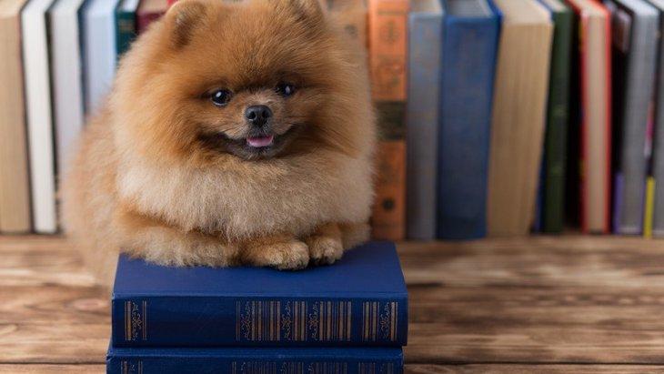 犬が『自律神経失調症』になっている可能性のある症状6つ