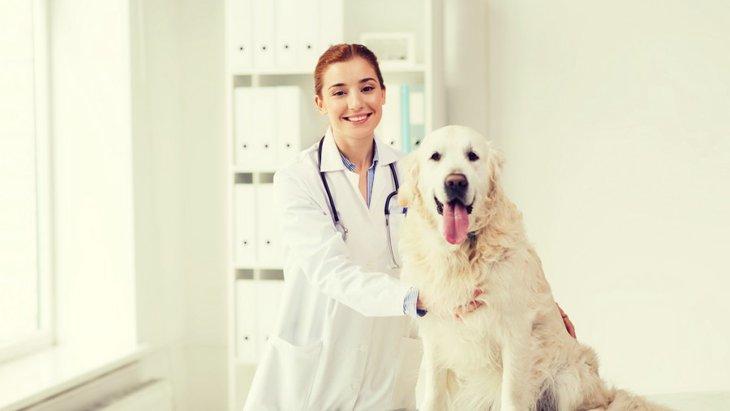 動物病院から飼い主さんへの5つのお願い
