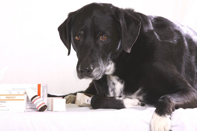 犬が乾燥剤を誤飲してしまった際の危険性と対処法