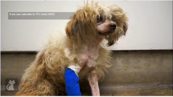 虐待とネグレクトを受けていた犬『エマーソン』の物語